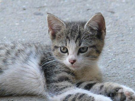 karmy bezzbożowe dla kotów
