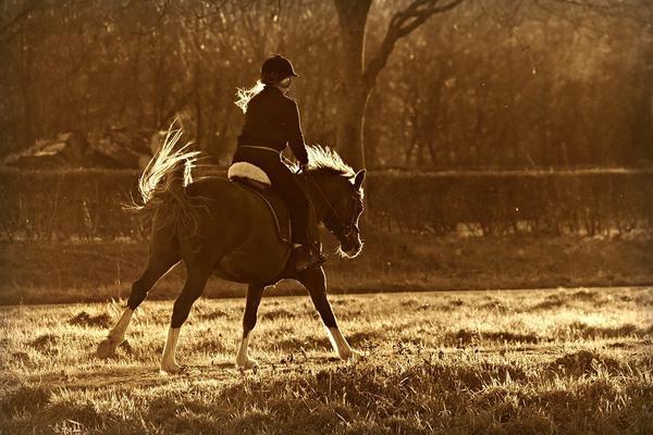 kamizelka jeździecka ochronna